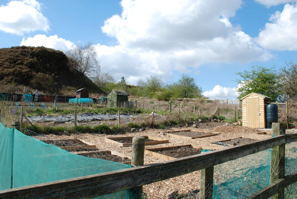 Allotment- 6 soil beds, small shed in background with large water butt on the right of it.